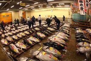 Tsukiji_fish_market1